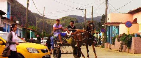 Vinales Street Horse